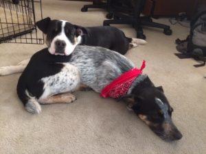 Zoe & Cosmo (bandana)